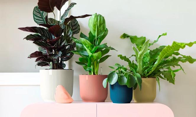 duurzame plantenpotten